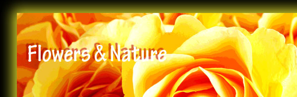 Flowers & Nature Gallery Collections